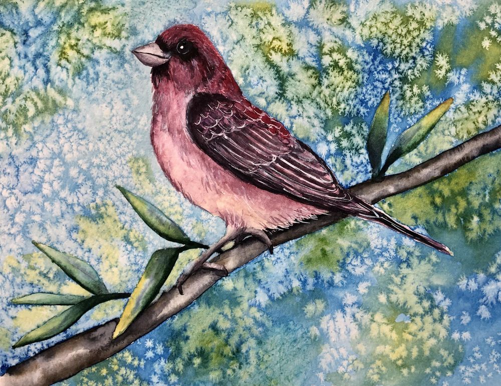 Purple Finch - image 1 - student project