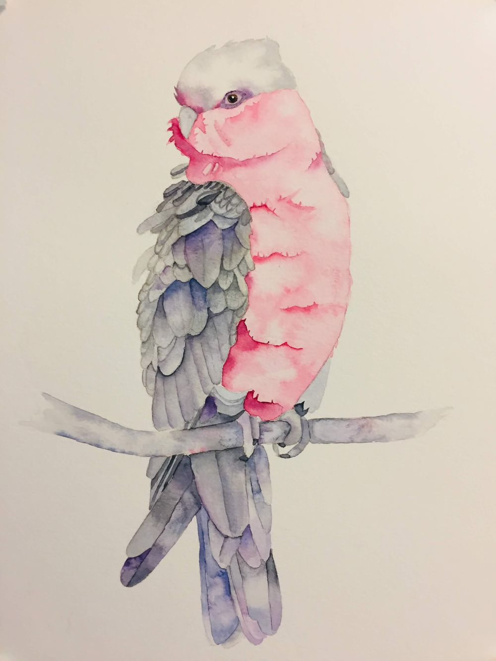 Finished Galah - image 1 - student project