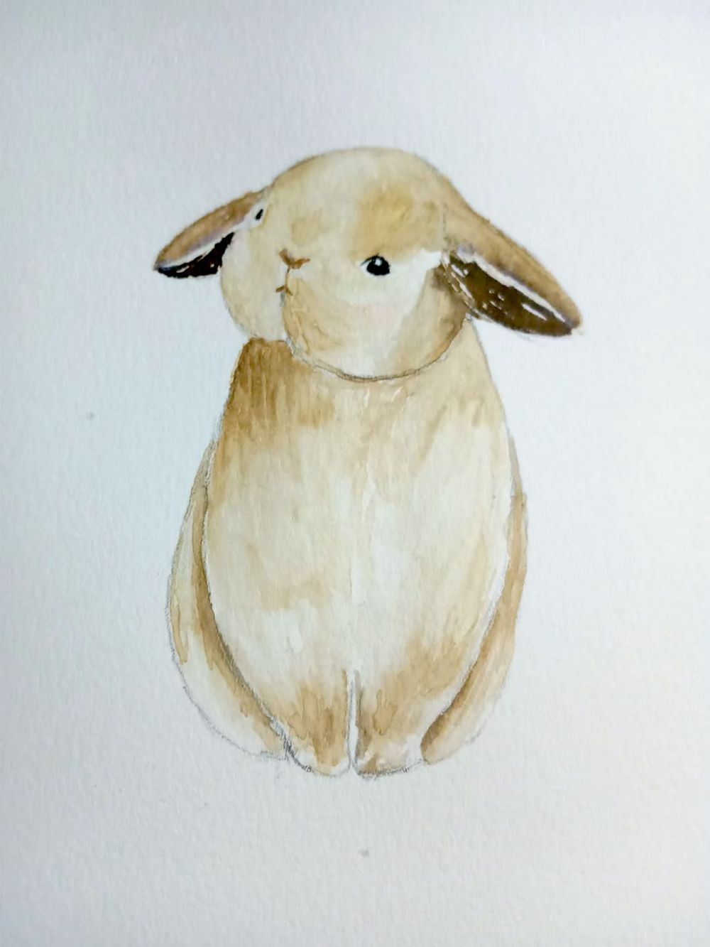 baby animals - image 1 - student project