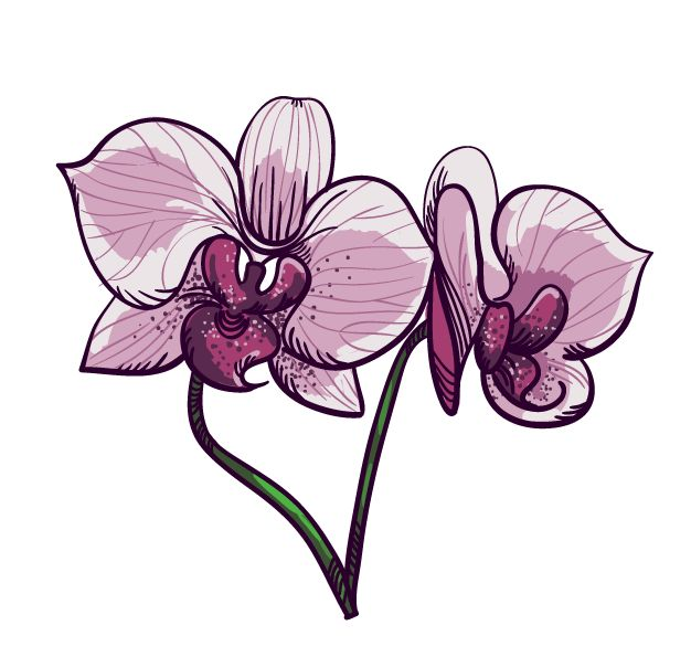 Orchid and strawberry - image 4 - student project