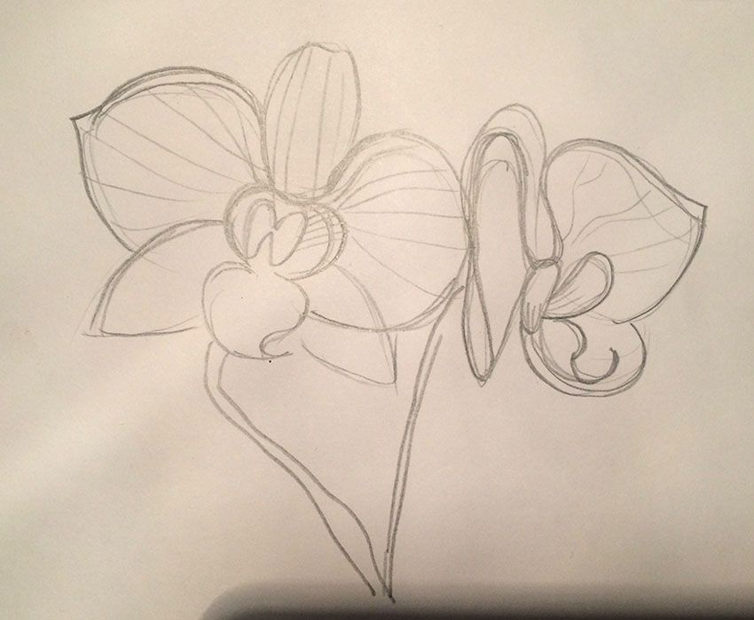 Orchid and strawberry - image 3 - student project