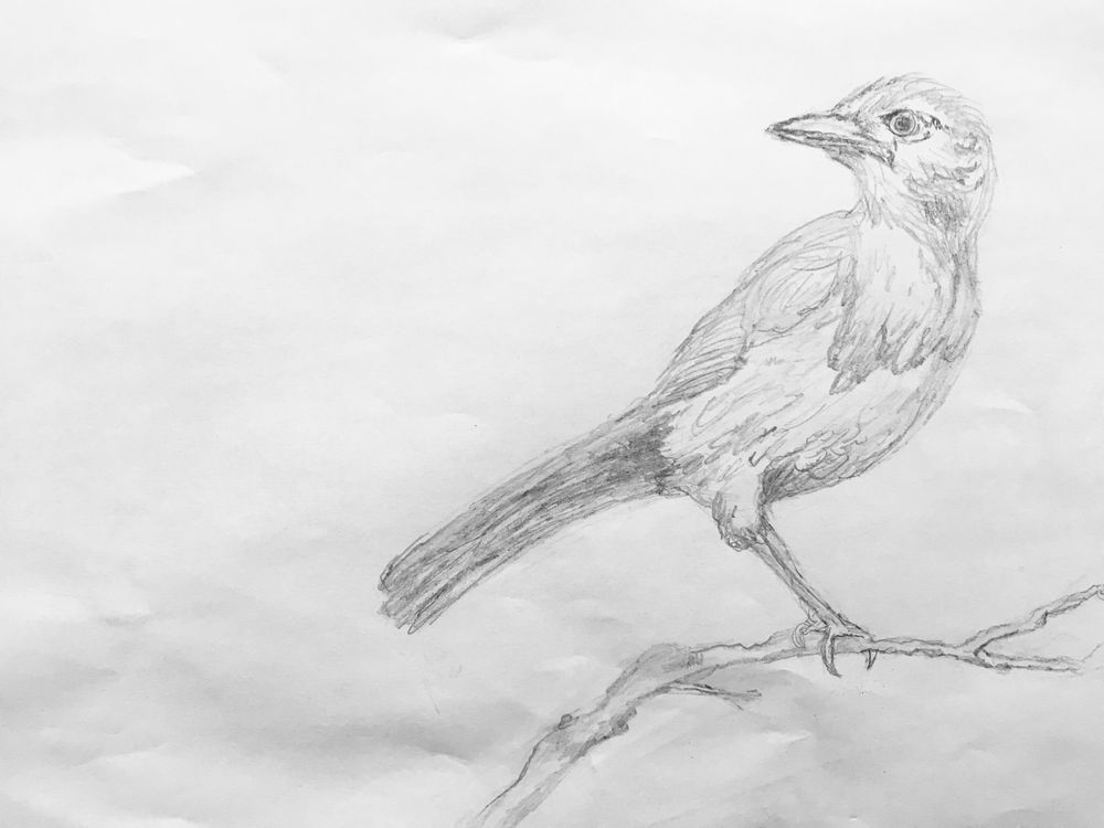 Birds - image 1 - student project