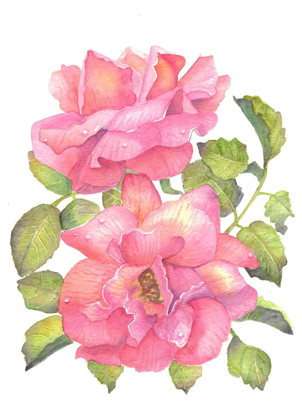 Coral roses - image 1 - student project