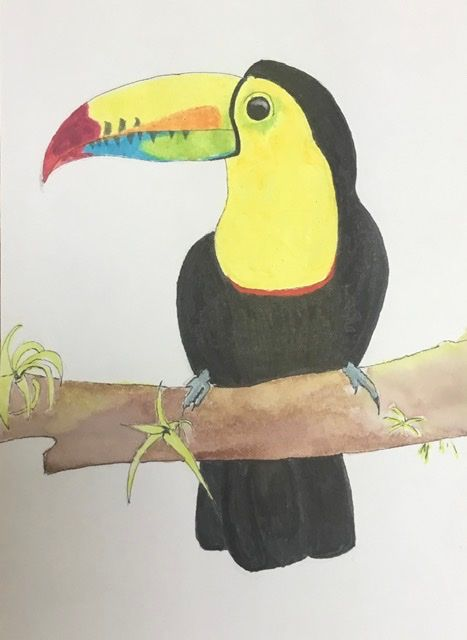 Toucan - image 1 - student project