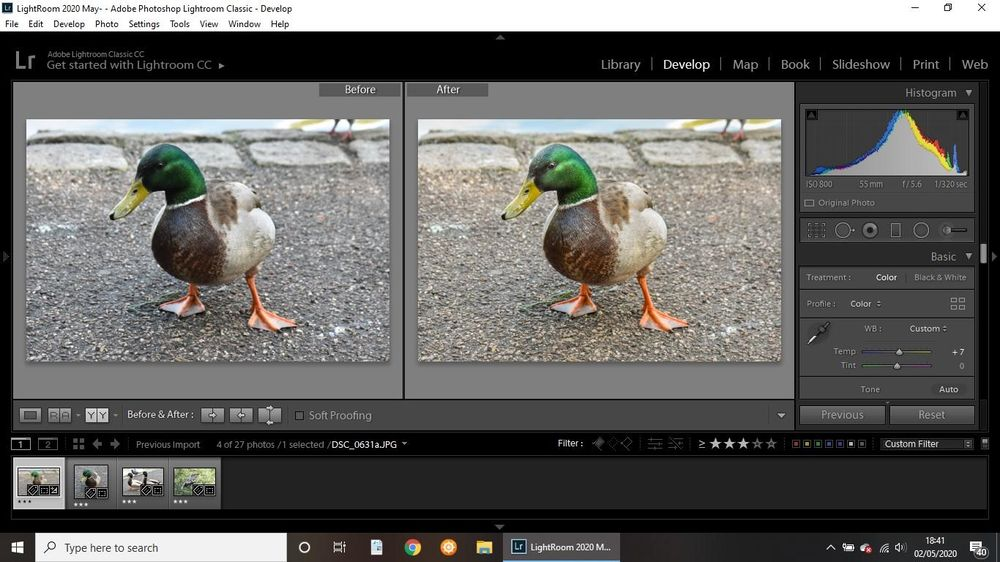 Ducks - image 2 - student project