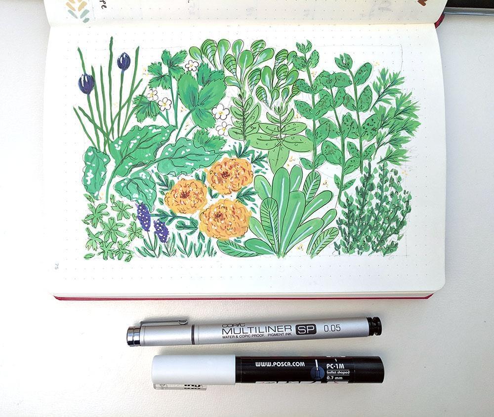 Botanical Illustration - image 3 - student project