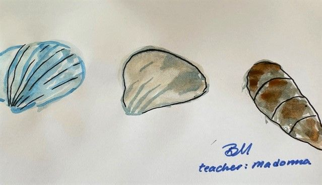 Sea shells - image 1 - student project