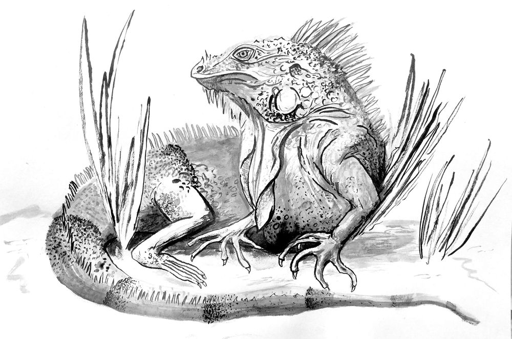 Iguana in the style of Molly Mendoza - image 1 - student project