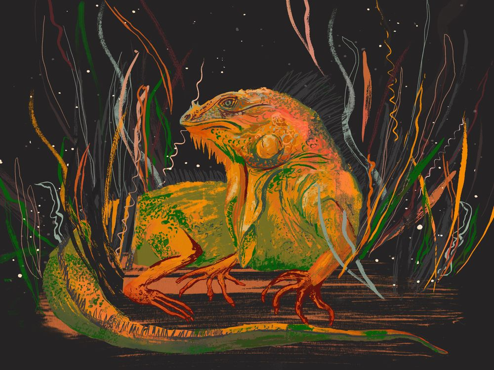Iguana in the style of Molly Mendoza - image 2 - student project