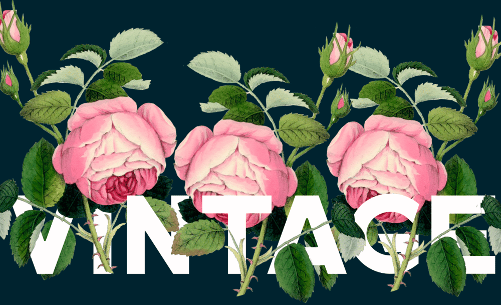 Vintage roses - image 1 - student project