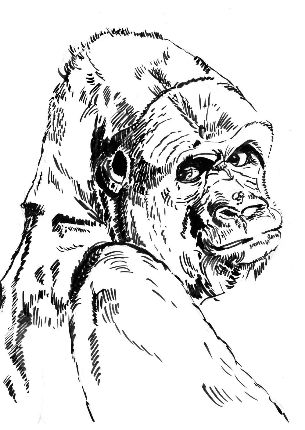 Gorilla - image 2 - student project
