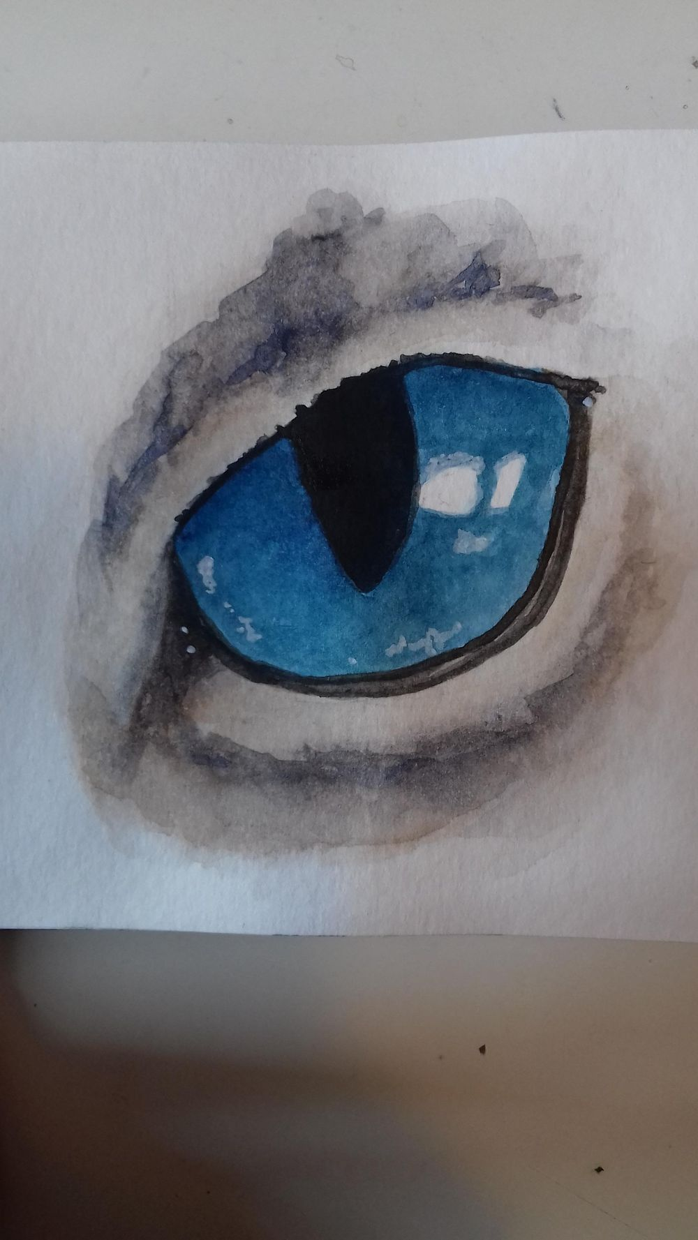 Animals Eyes - image 1 - student project