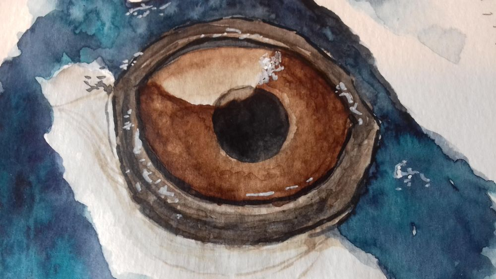 Animals Eyes - image 2 - student project