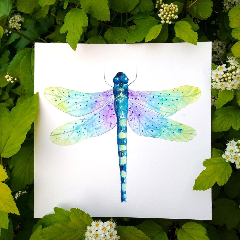 Magical dragonflies - image 2 - student project