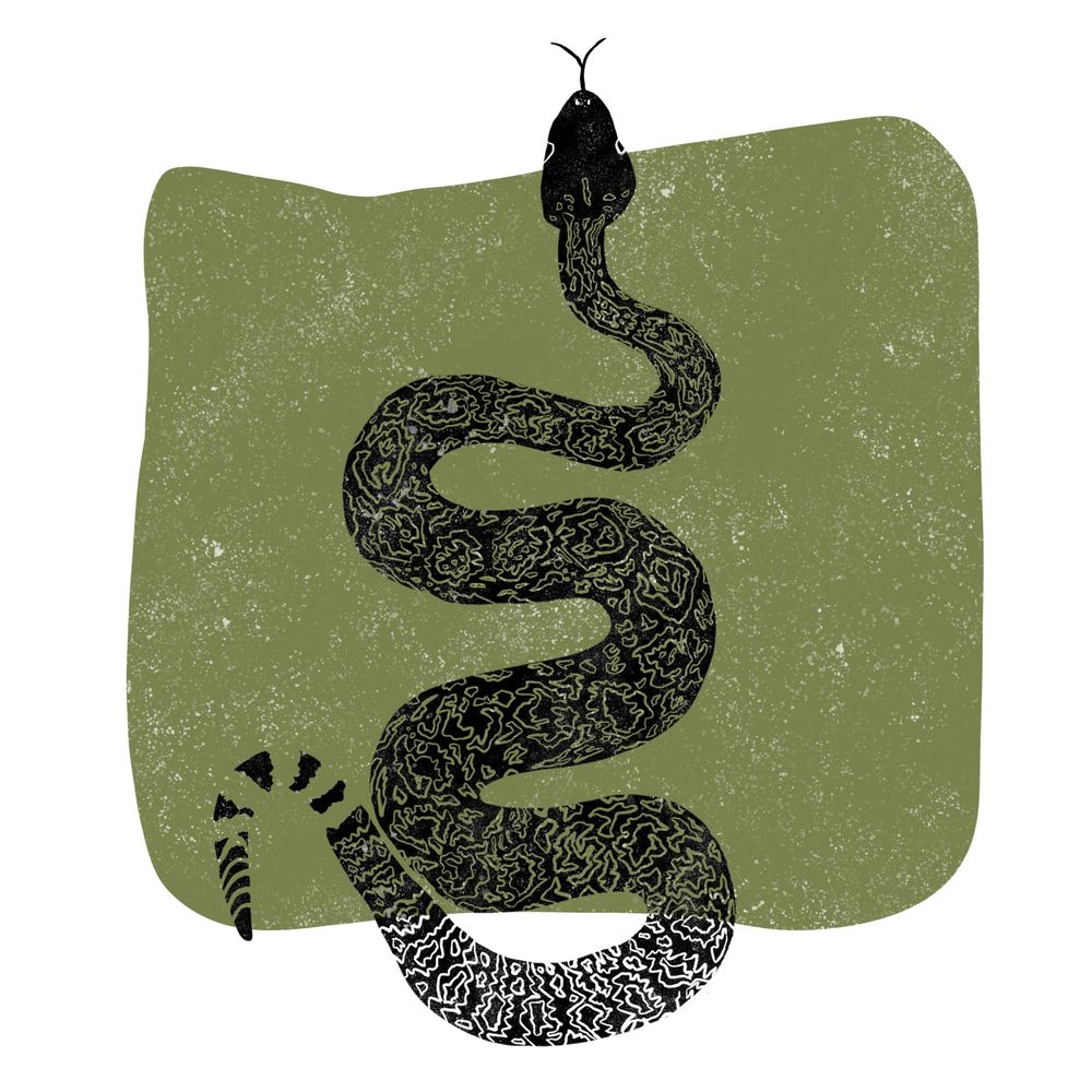 Snake - image 3 - student project