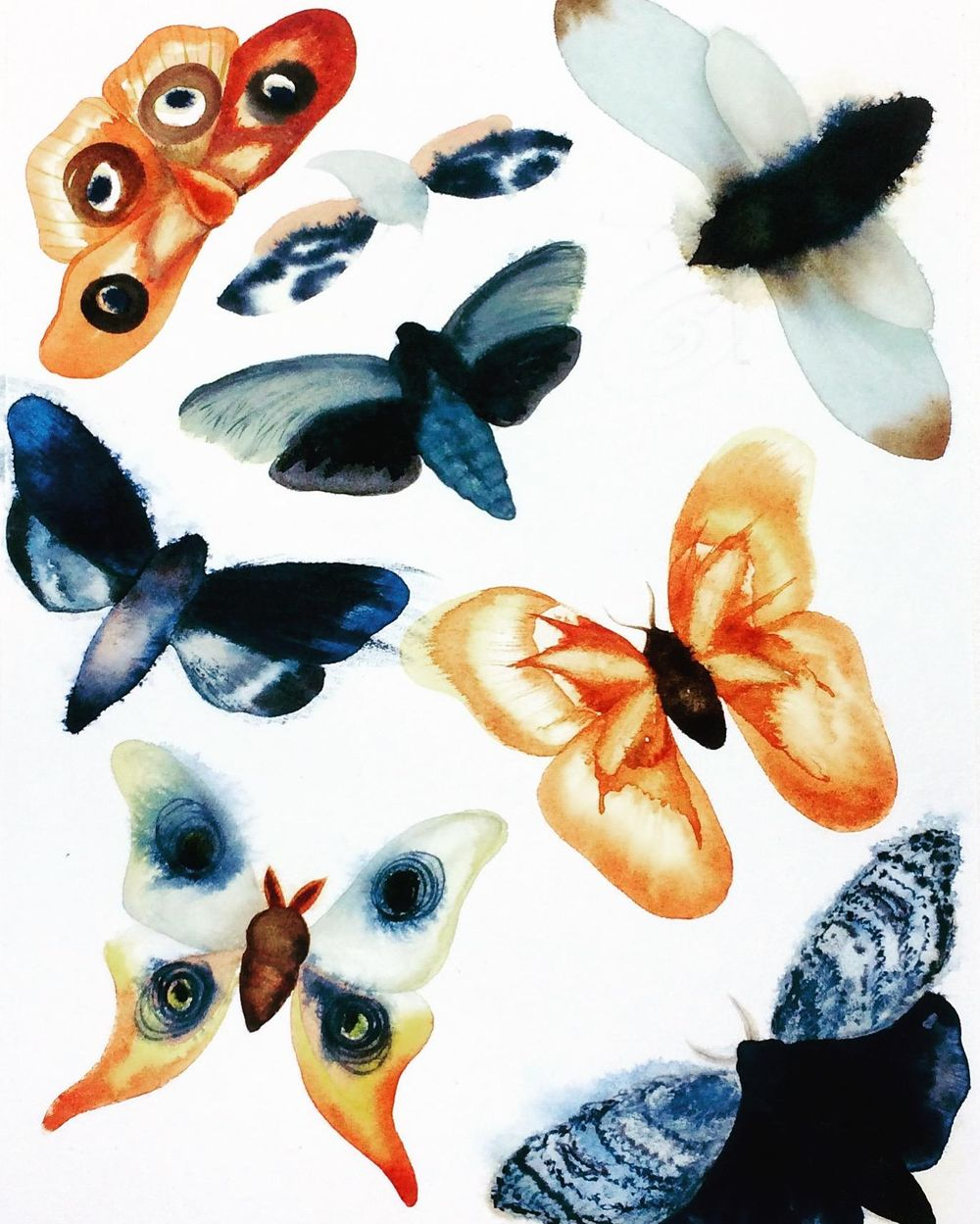 Watercolor and gouache moths - image 1 - student project