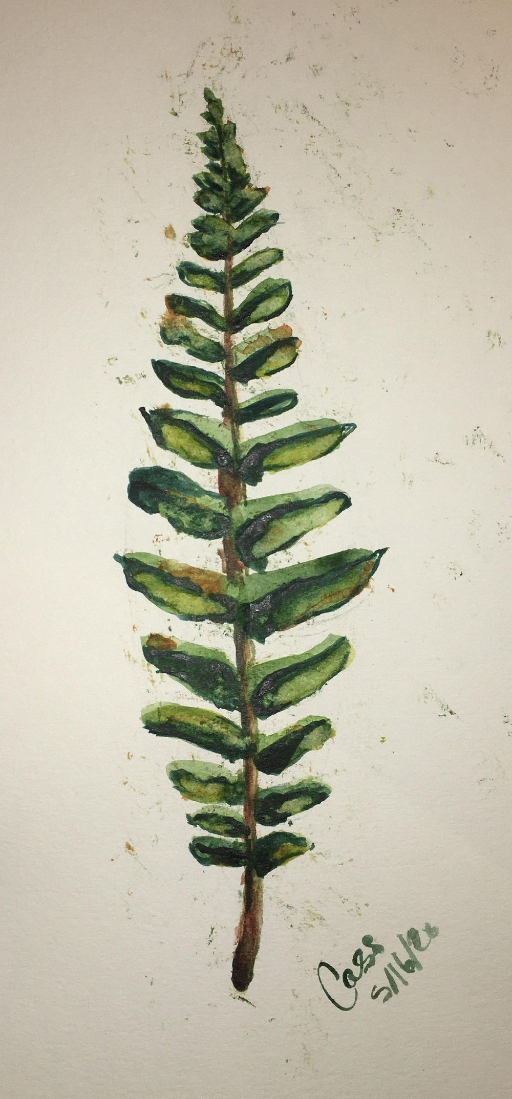 watercolor fern - image 1 - student project