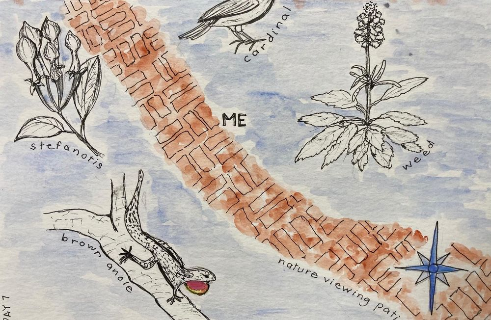 Urban Nature Journaling - image 7 - student project
