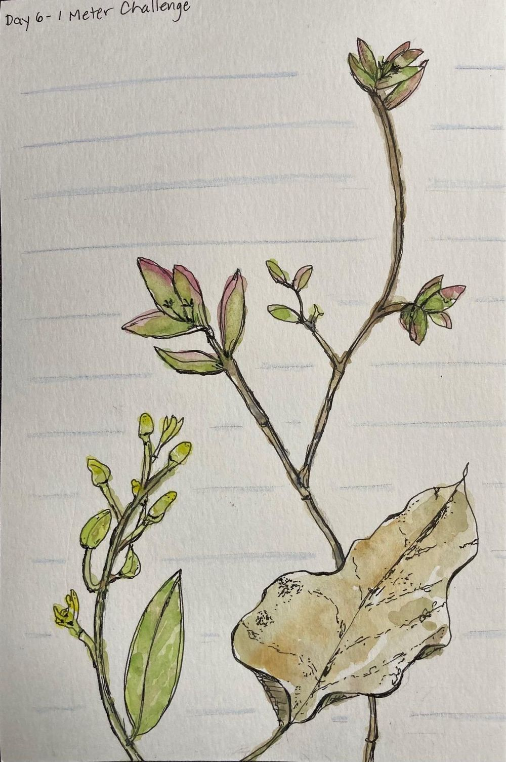 Urban Nature Journaling - image 6 - student project