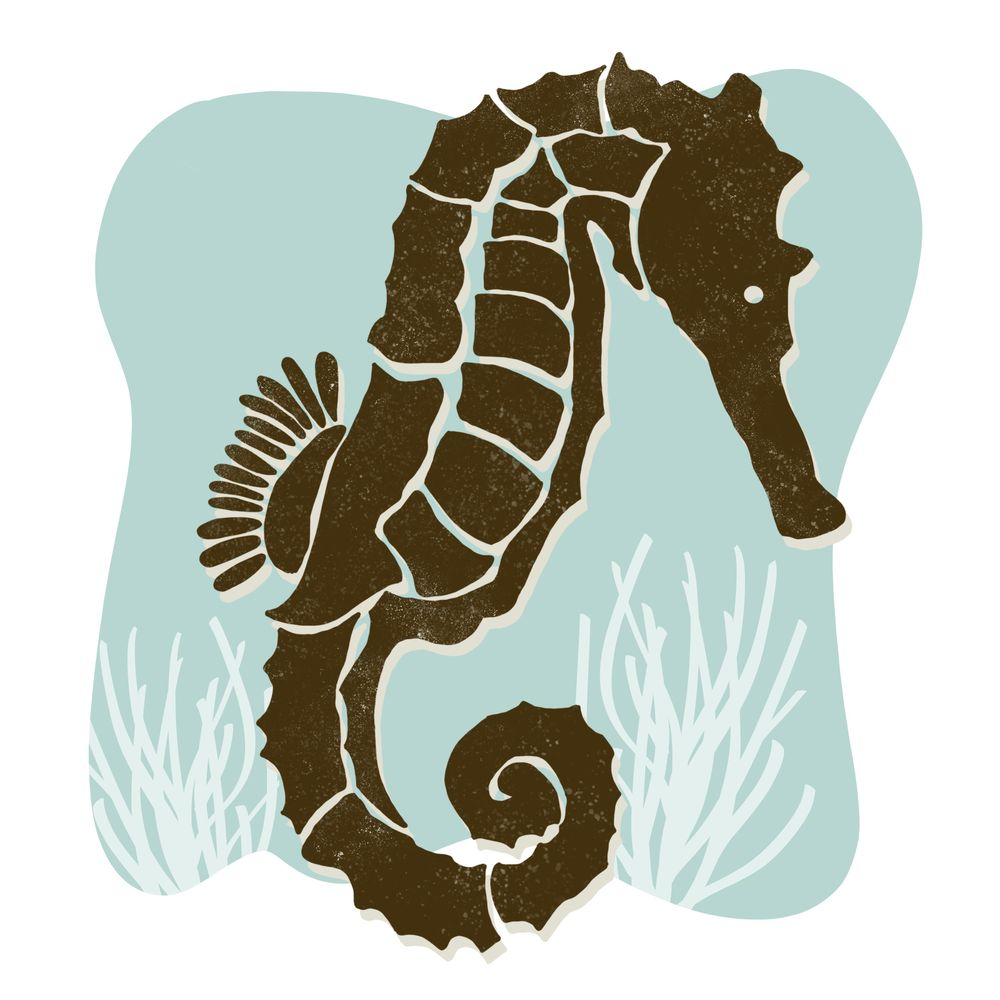 Seahorse - image 1 - student project