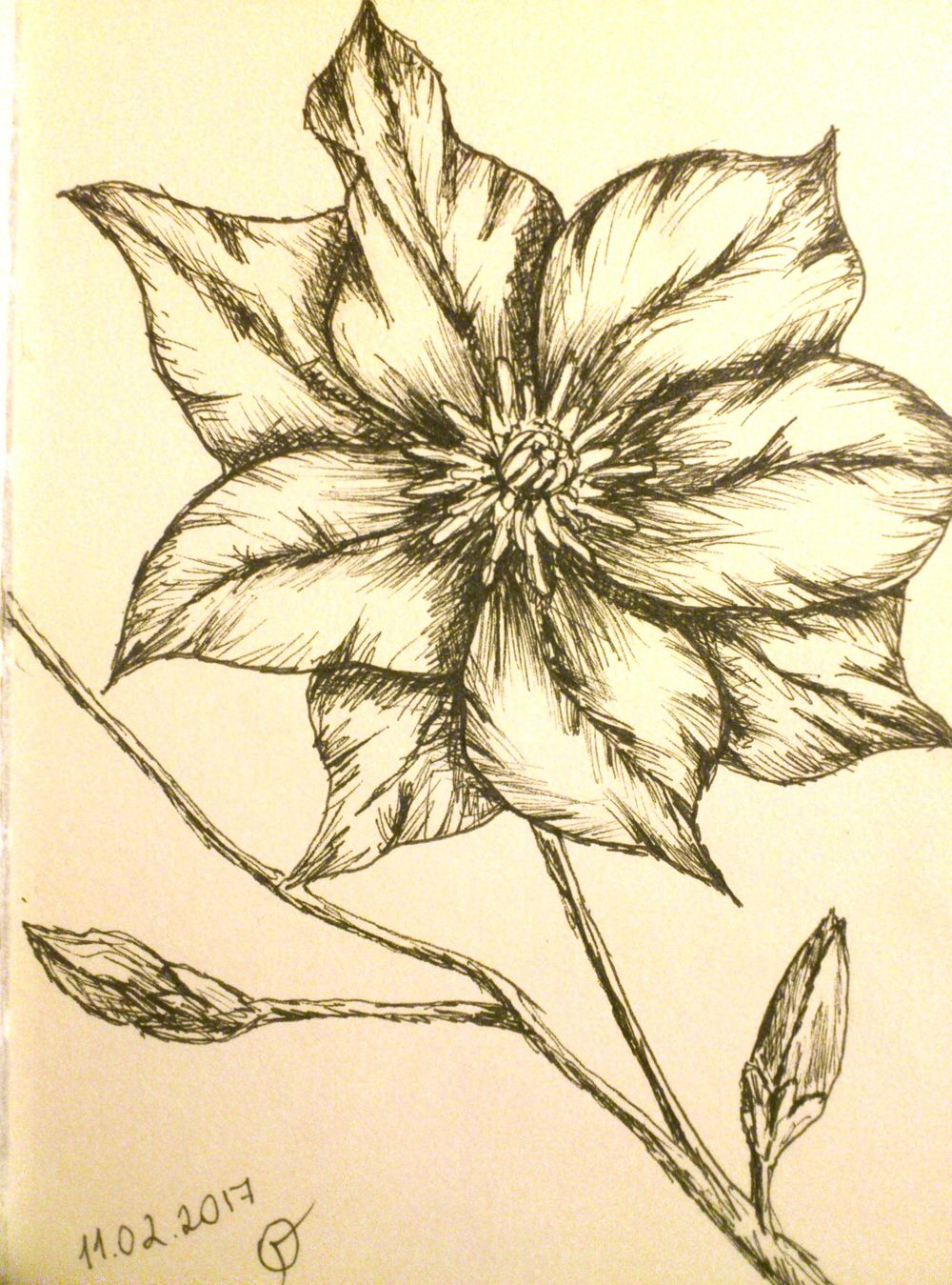 Clematis - image 1 - student project