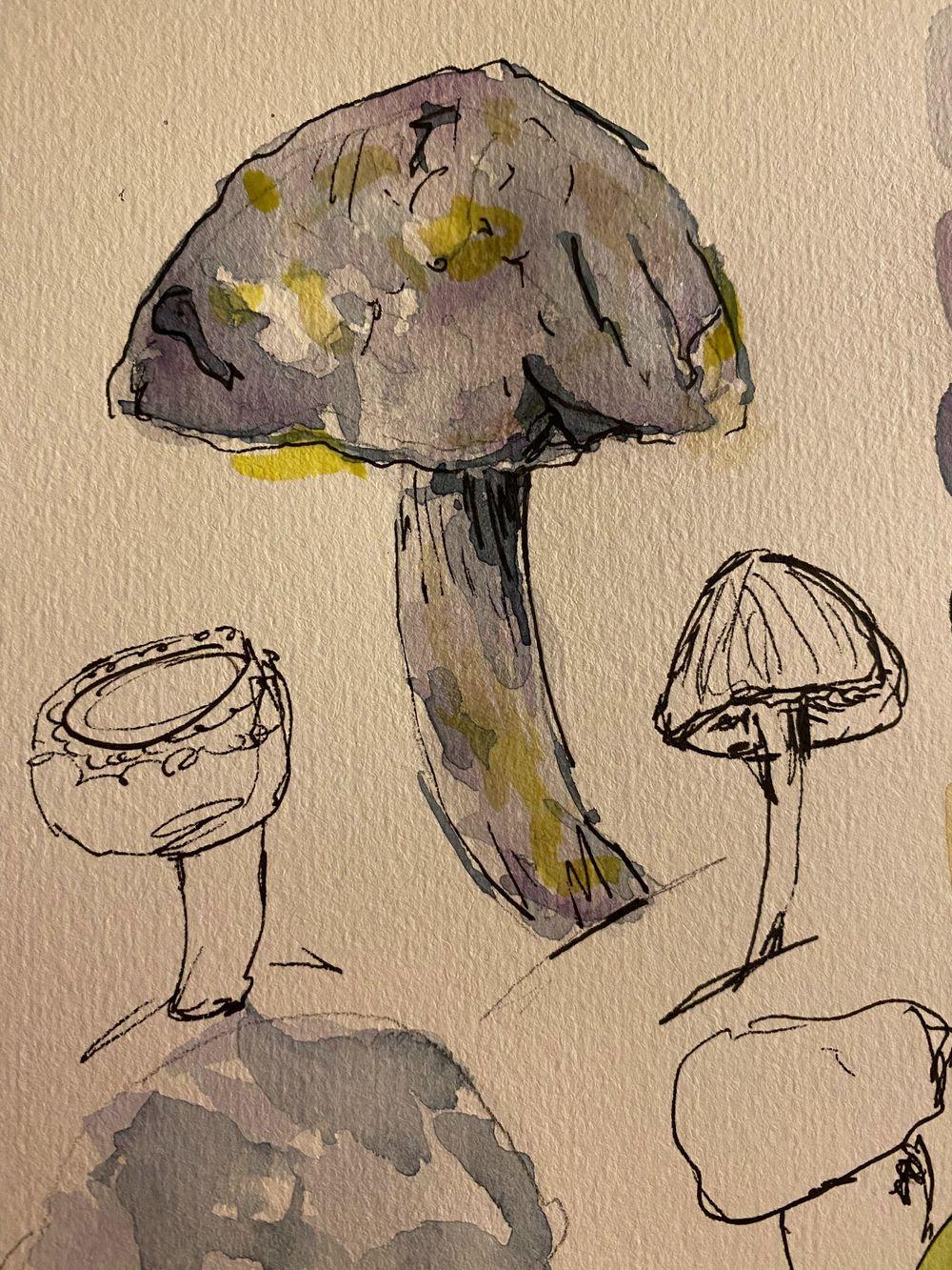 mushrooms! - image 2 - student project