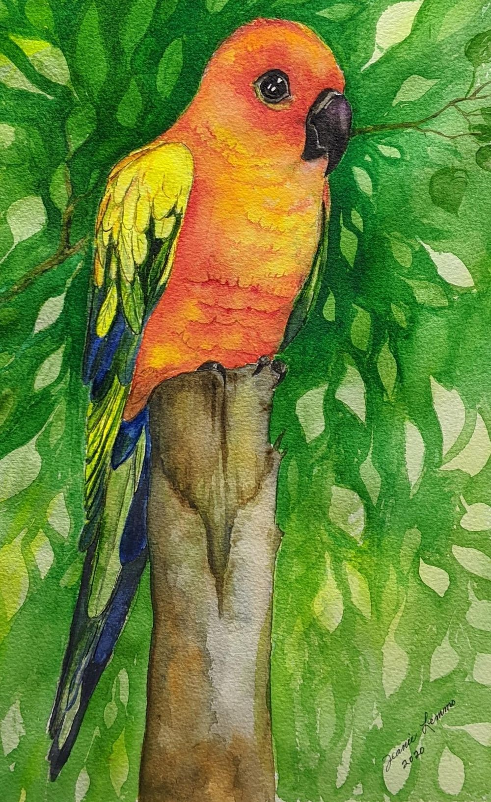 Jeanie's Conure - image 1 - student project