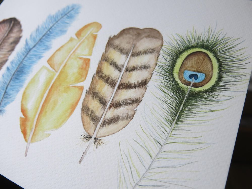 Feathers:D - image 3 - student project