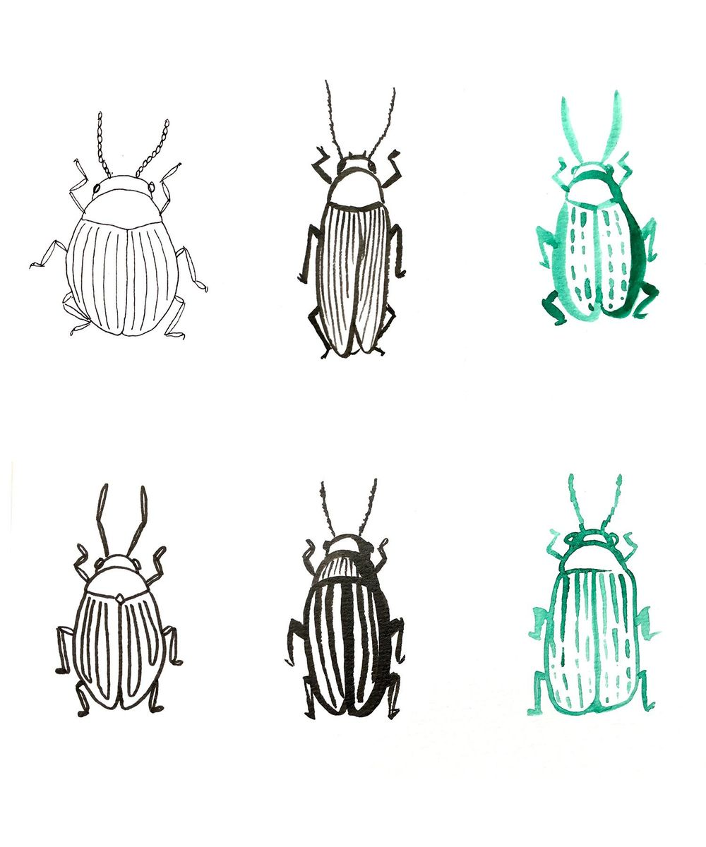 Flies and Bees and Bugs, oh my! - image 1 - student project
