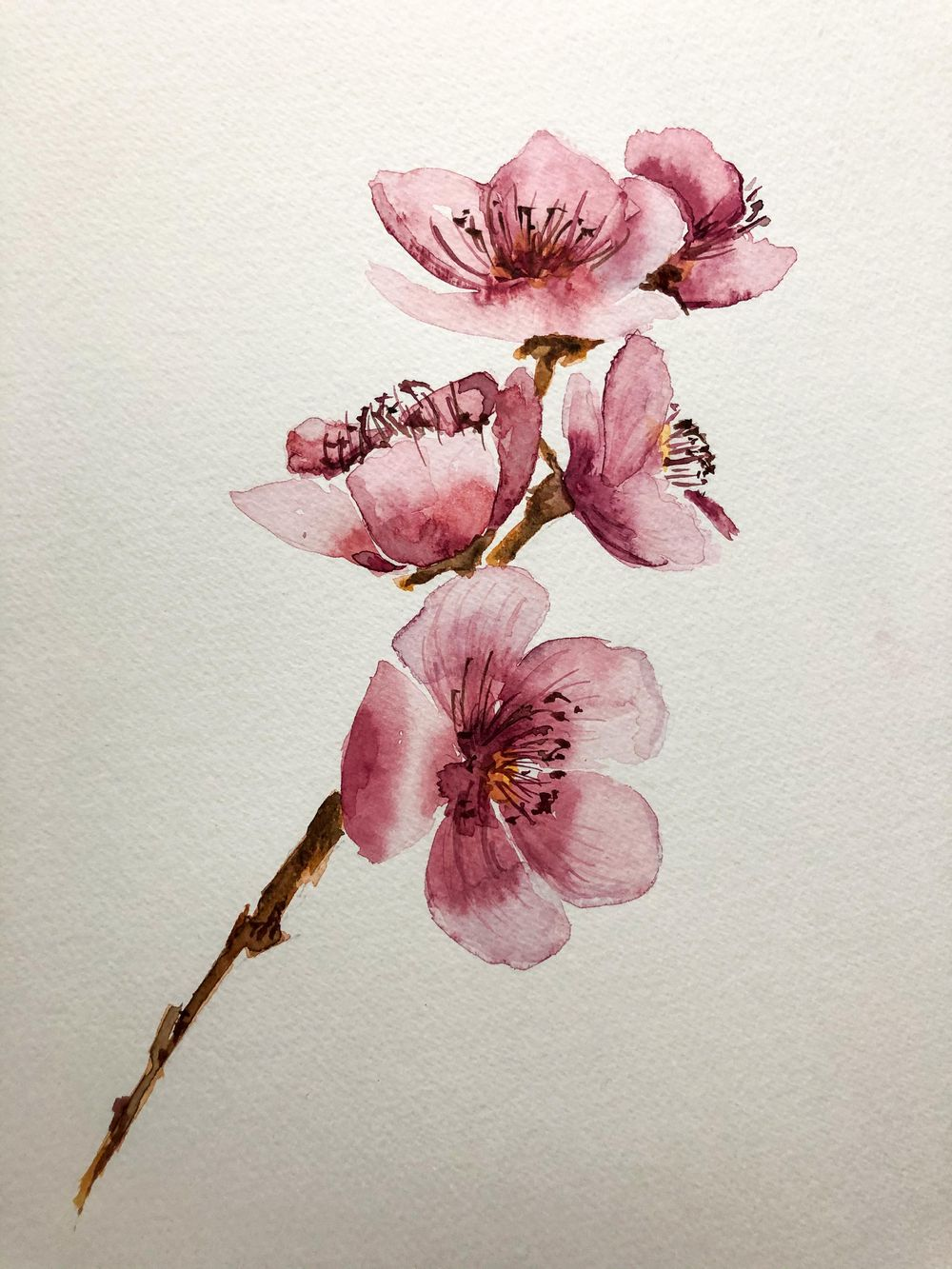 Fleurs de cerisiers - image 1 - student project