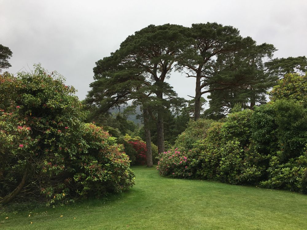 Muckross Gardens - image 1 - student project