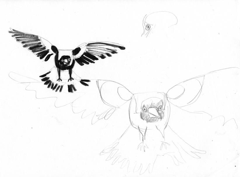 Magpies - image 1 - student project