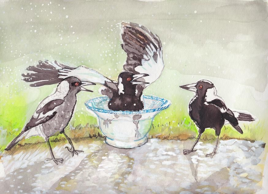 Magpies - image 3 - student project