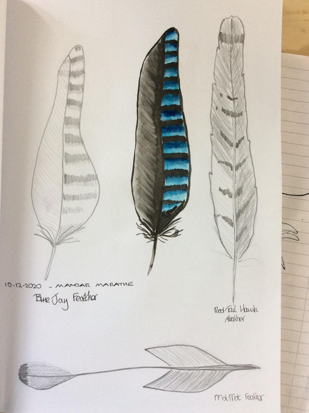 Feathers - image 1 - student project