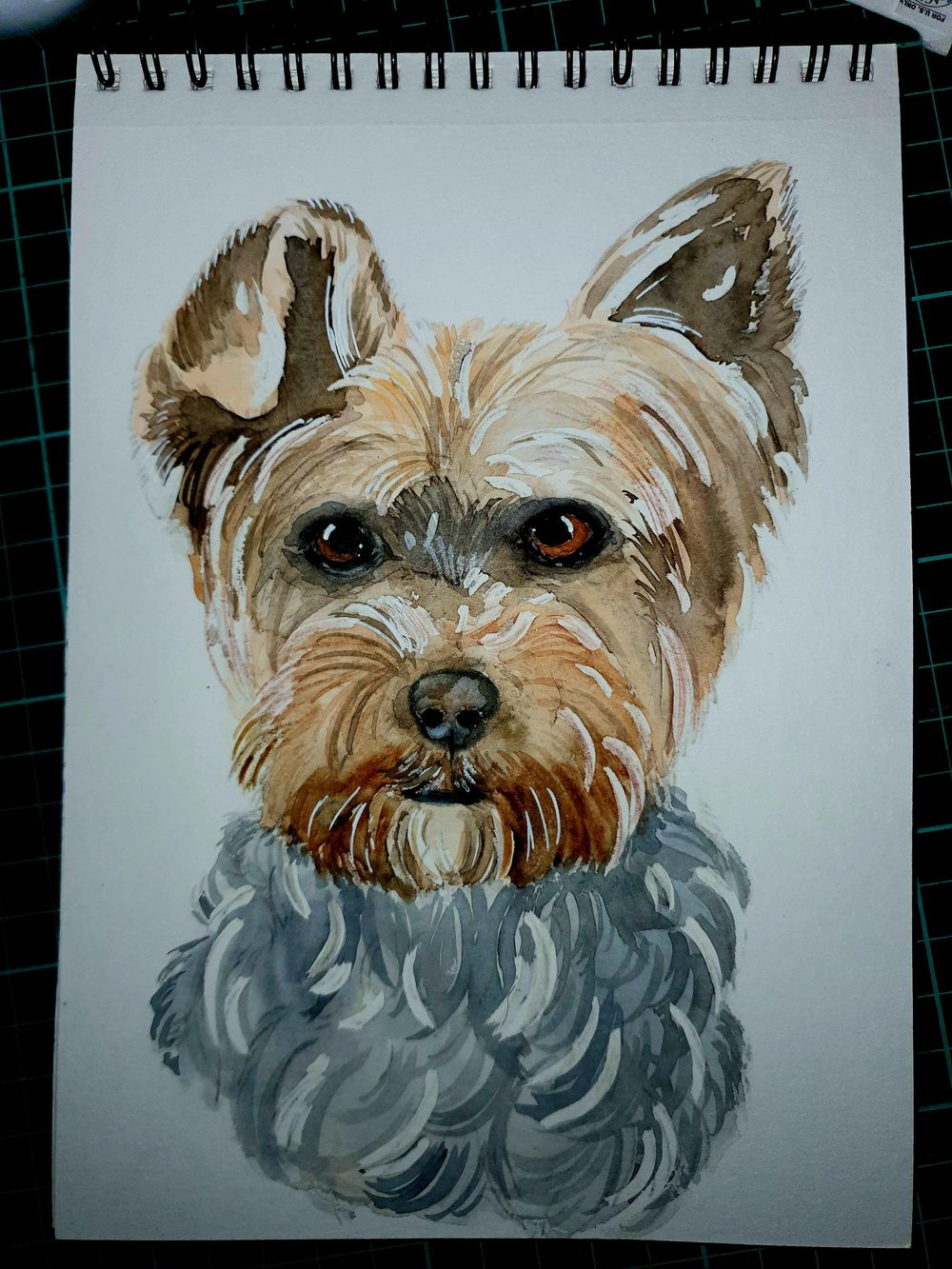 yorkie :) - image 1 - student project