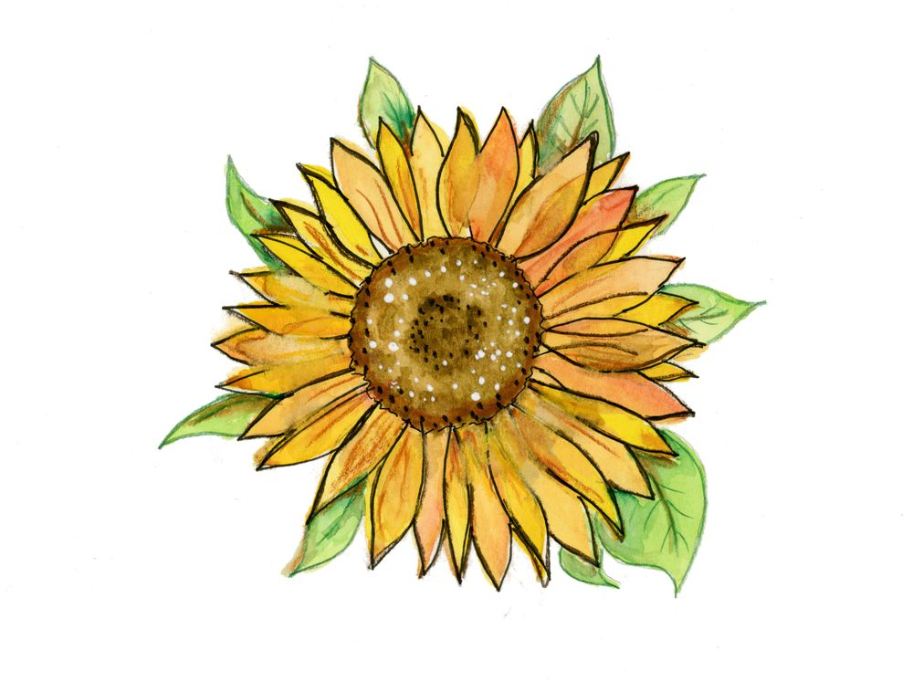 Maple Leaf + Sunflower + Hibiscus - image 2 - student project
