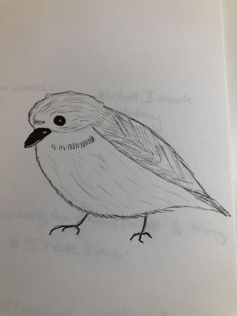my first bird - image 1 - student project