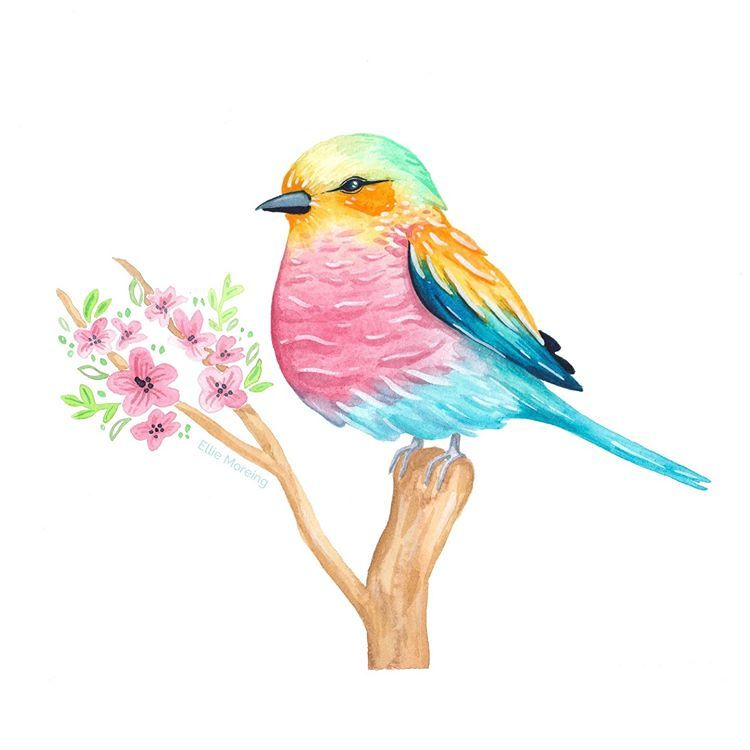 Whimsical Watercolour Birds - image 2 - student project