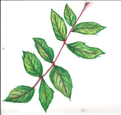 watercolor leaves - image 2 - student project