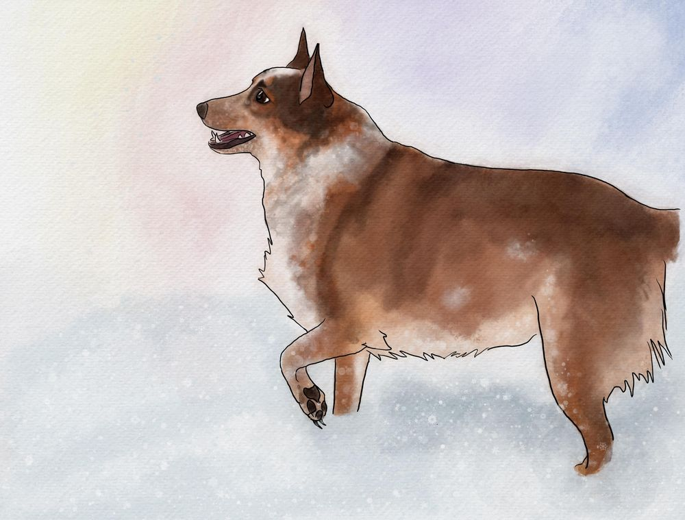 Baxter in the snow - image 1 - student project