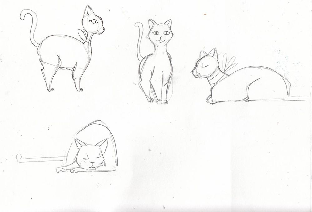 My cute cats - image 2 - student project