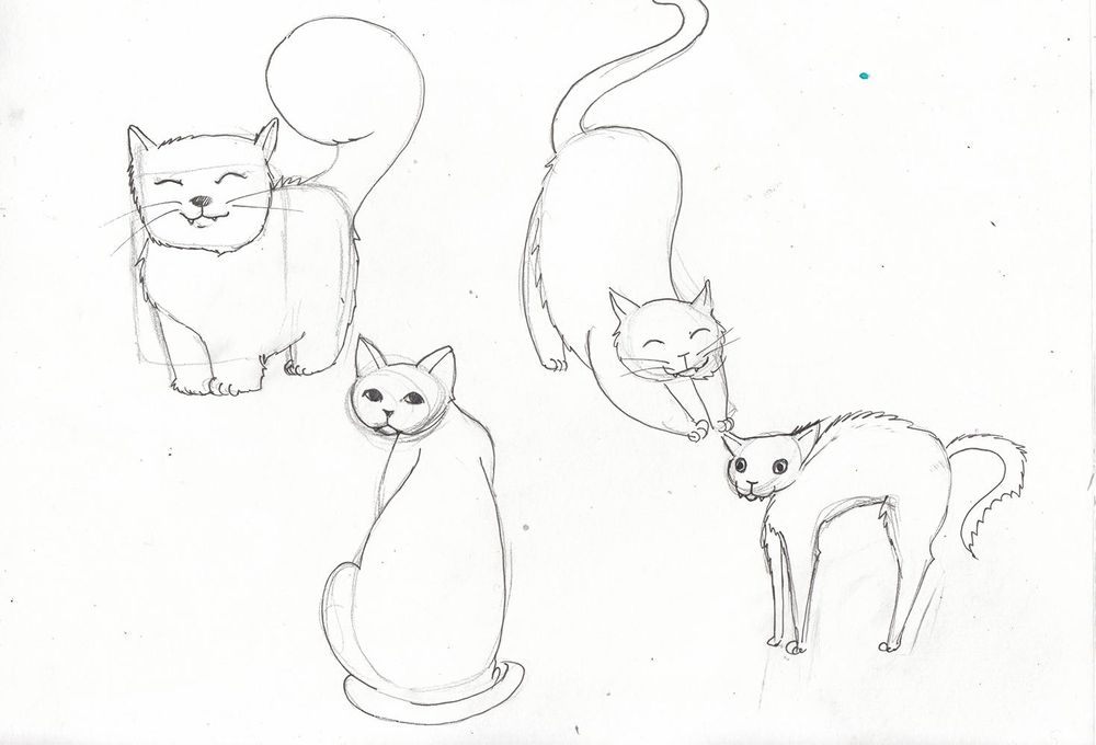 My cute cats - image 4 - student project