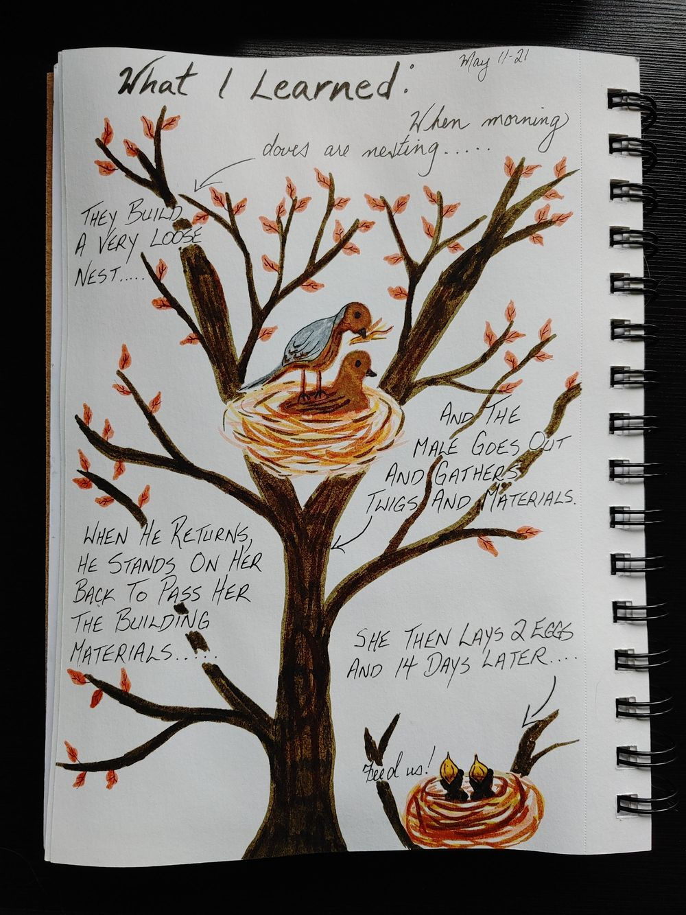1st Time Journaling Attempt- 14 Day Challenge - image 2 - student project