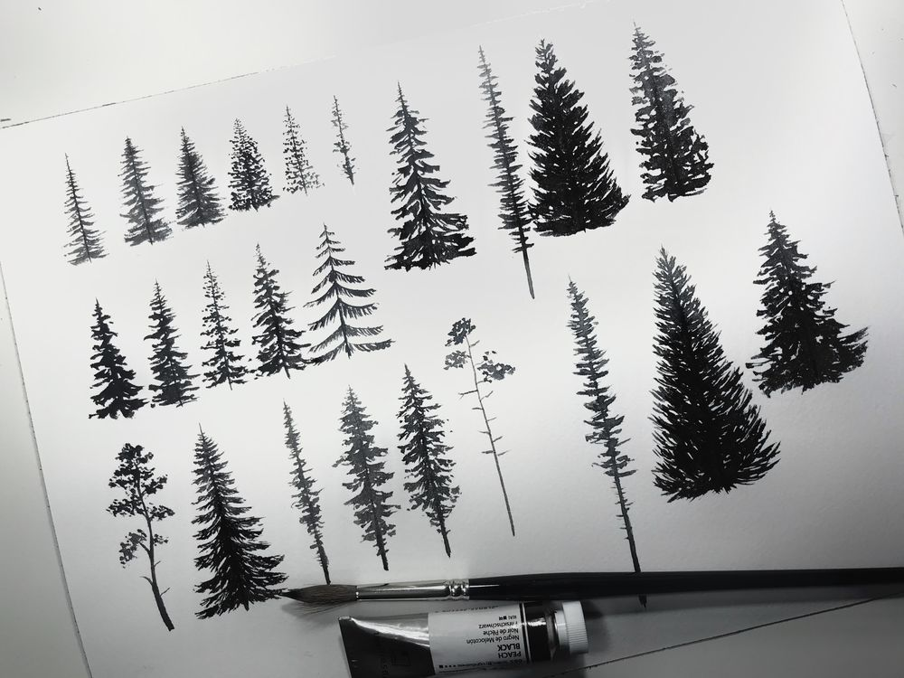 Camping amid the evergreens - image 1 - student project