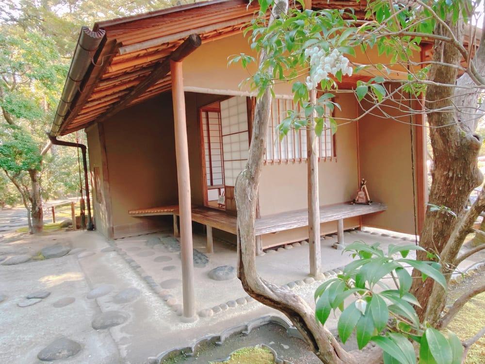 Sakura, Tea house and Bento - image 2 - student project