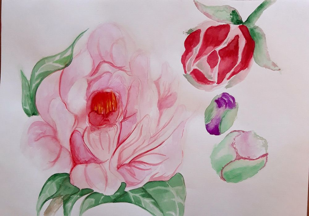 Peonies in full blossom - image 1 - student project