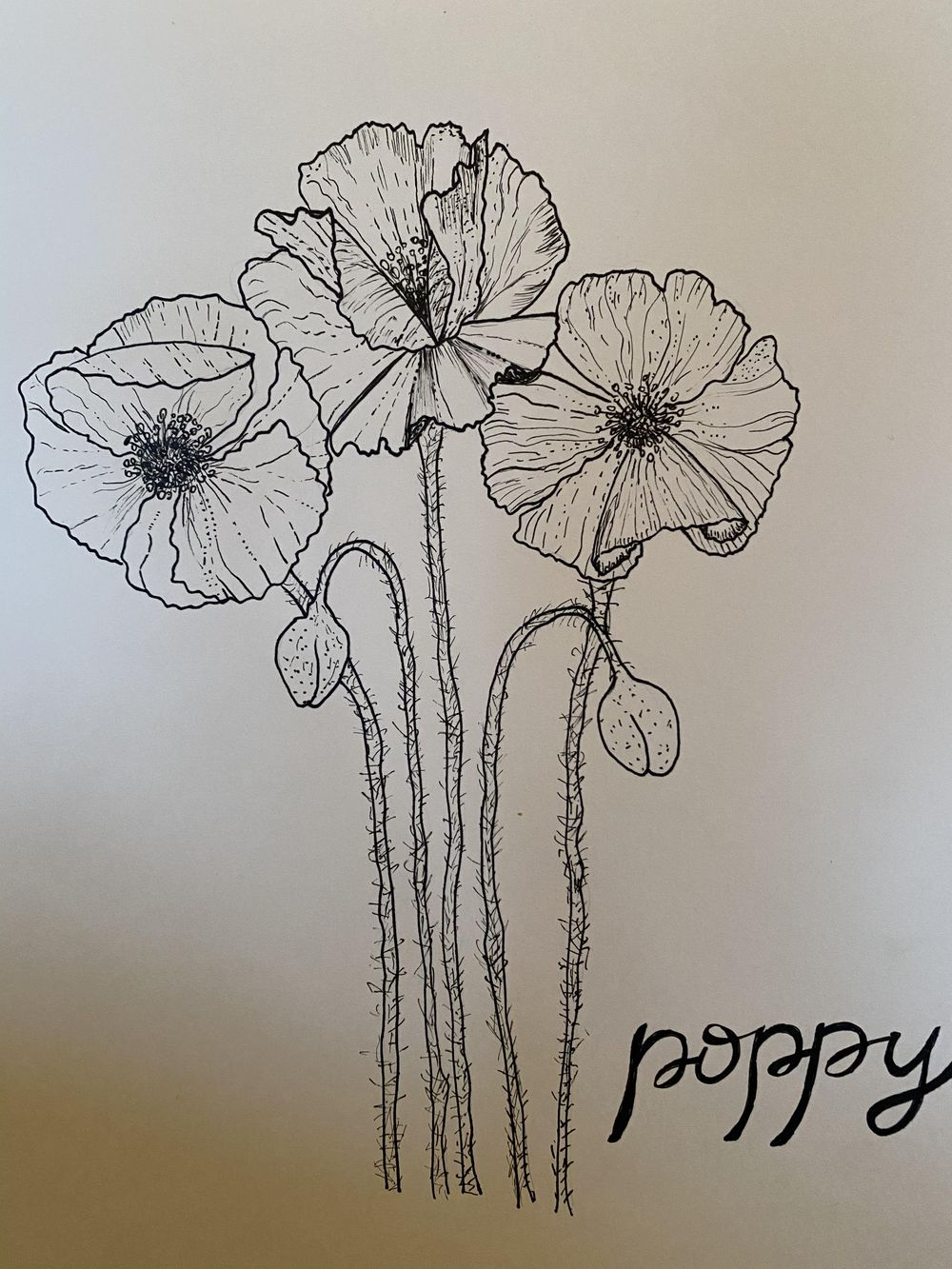 Poppies and hydrangeas - image 2 - student project