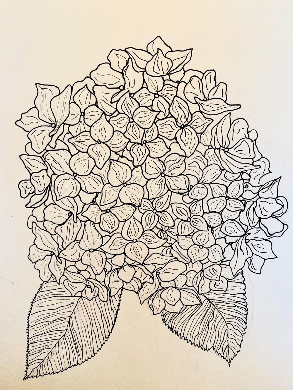 Poppies and hydrangeas - image 1 - student project
