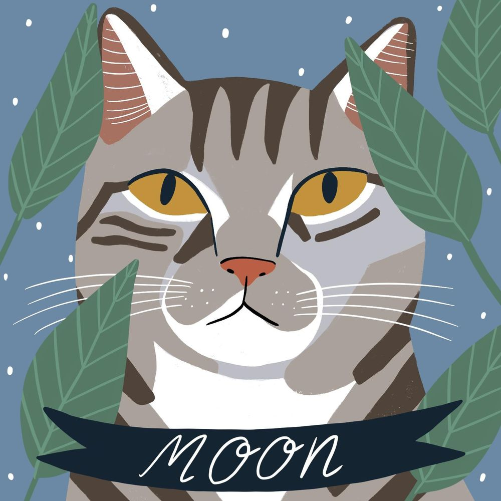 A Portrait of my Cat Moon - image 1 - student project