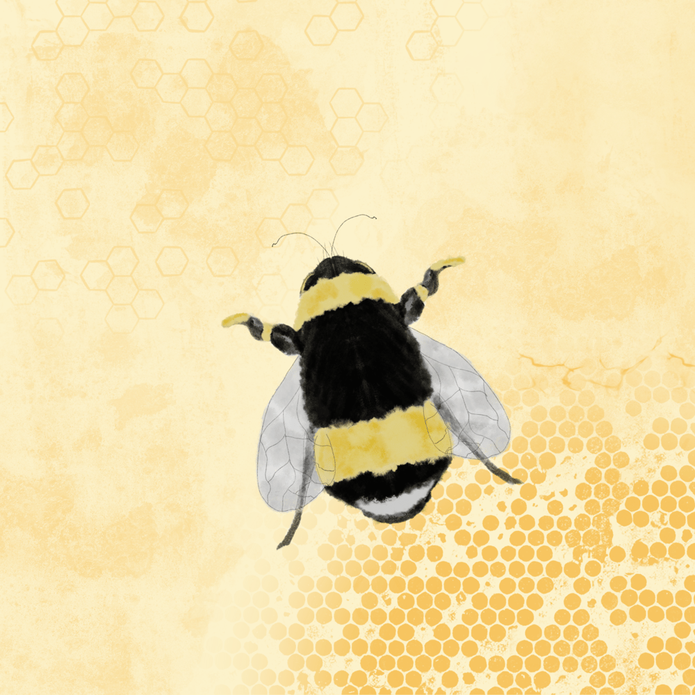 Honey Bee - image 2 - student project